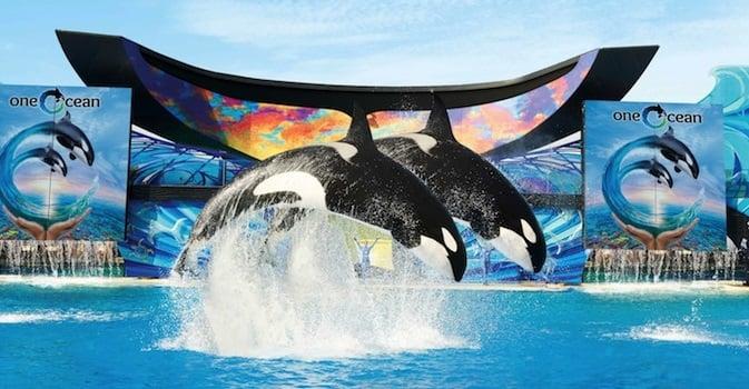 Comprando os ingressos pela internet: SeaWorld Califórnia