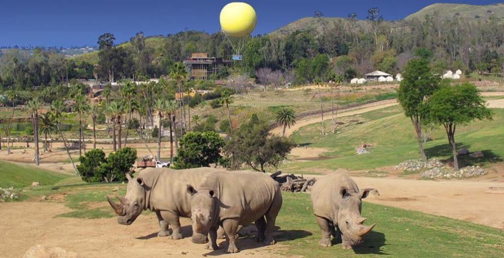 Atrações do San Diego Zoo Safari Park em San Diego