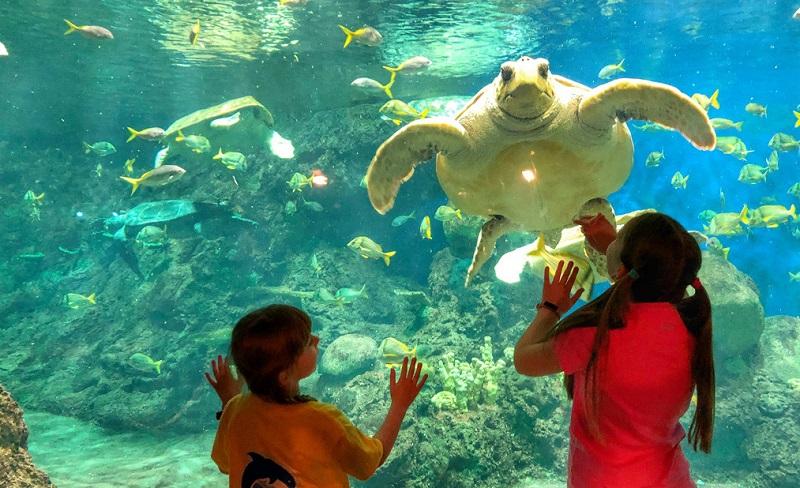 Crianças no Parque SeaWorld em San Diego