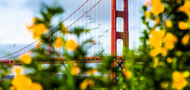 Flores em San Francisco