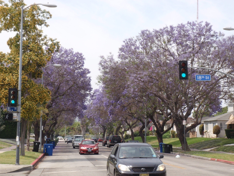 Primavera em Los Angeles