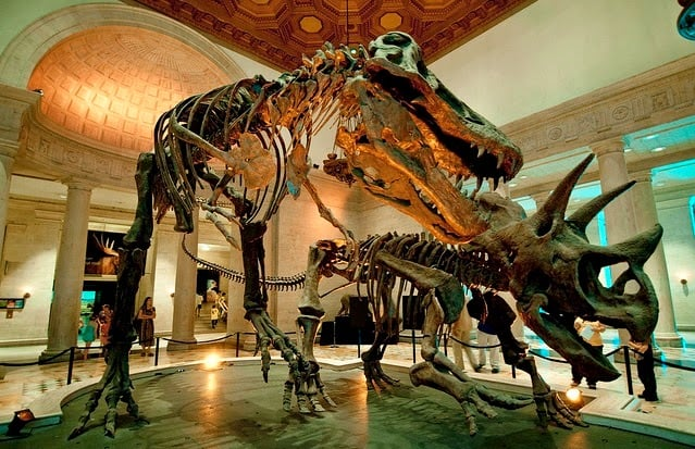 Atrações no Museu de História Natural de Los Angeles