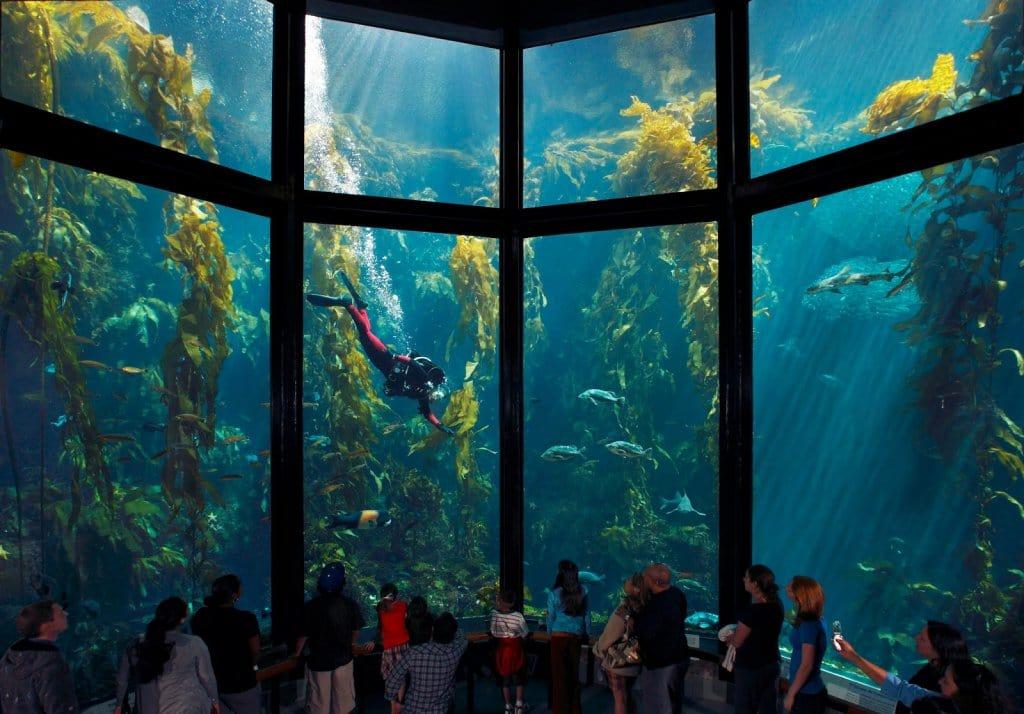 Visitantes no Aquarium of the Bay em San Francisco