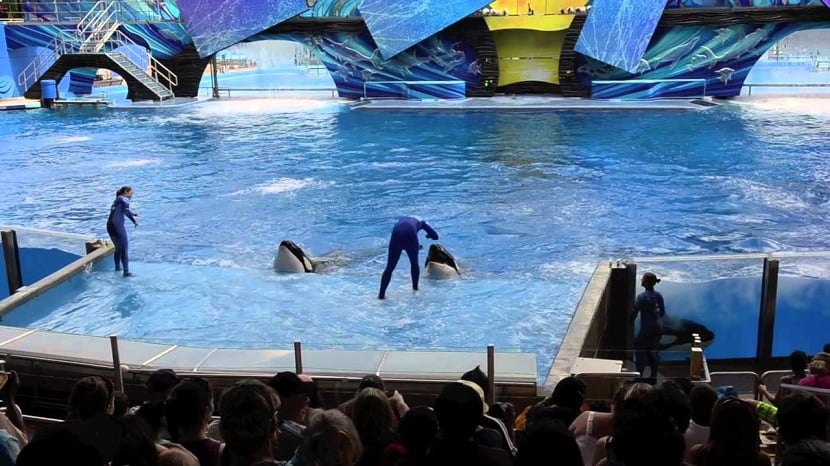 Orca shamu no SeaWorld