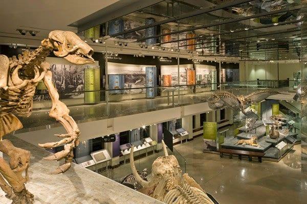 Atrativos no Museu de História Natural de Los Angeles