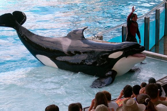 Parque SeaWorld suspende show com orcas