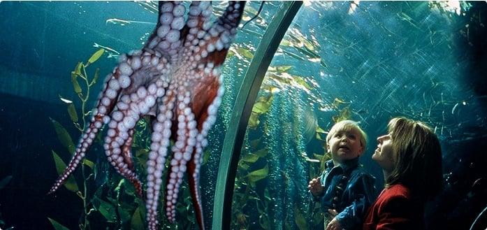 Atrações no Aquarium of the Bay