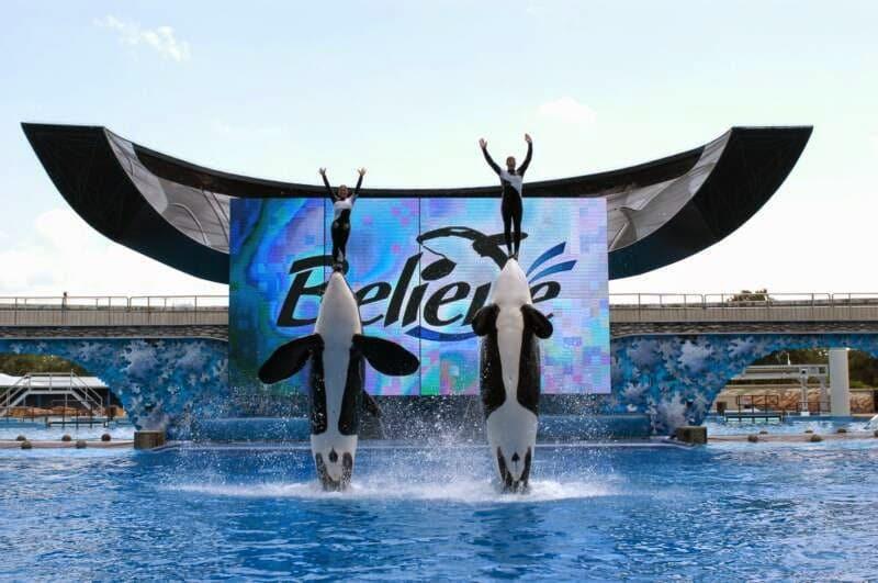 Show com orcas no Parque SeaWorld