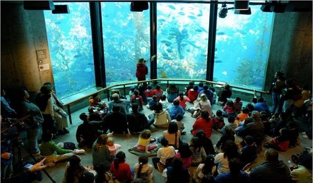 Passeio no Monterey Bay Aquarium em Monterey