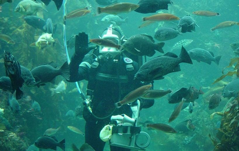 Tipos de tours no Monterey Bay Aquarium em Monterey