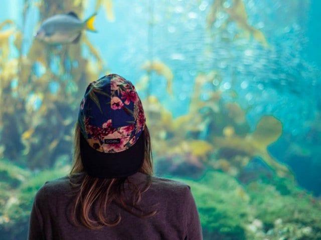Monterey Bay Aquarium na Califórnia