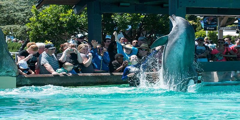 Atrações no Parque SeaWorld em San Diego