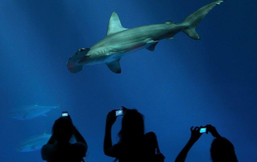 Shark Tour no Monterey Bay Aquarium na Califórnia