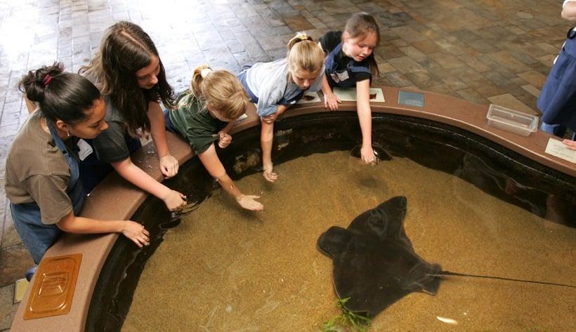 Feeding Frenzy no Monterey Bay Aquarium na Califórnia
