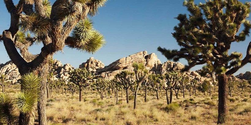 Visita ao Parque Nacional de Joshua Tree na Califórnia