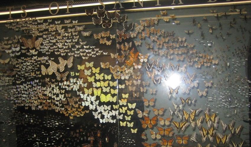 Exposições no Museu da História Natural em Santa Bárbara