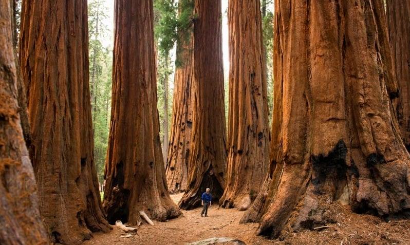 Atrações no Parque Nacional da Sequoia na Califórnia
