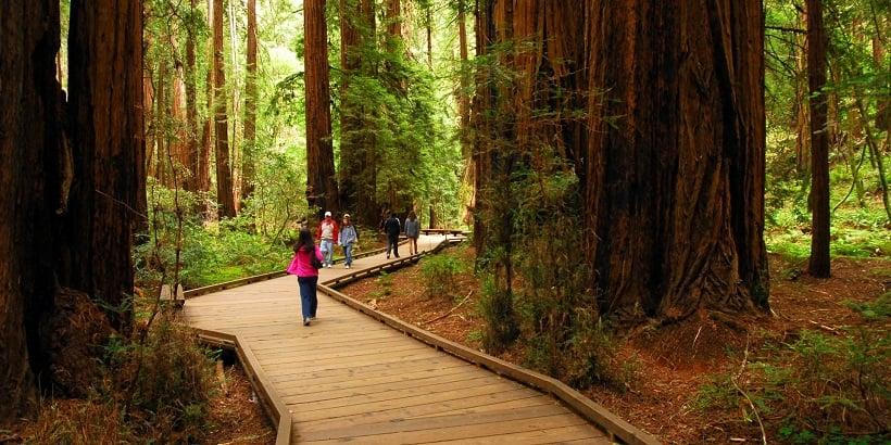 Visita ao Parque Nacional de Muirwoods na Califórnia