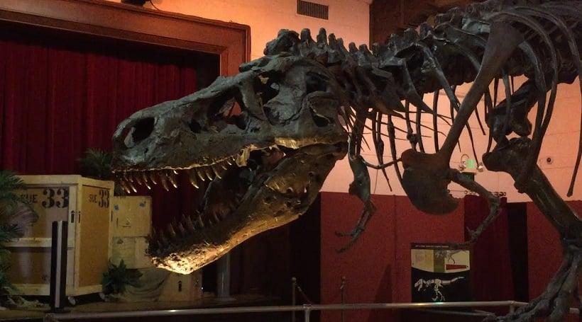 Visita ao Museu da História Natural em Santa Bárbara