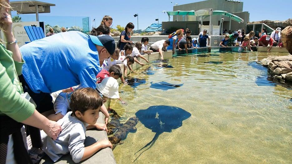 Turistas conhecendo Long Beach