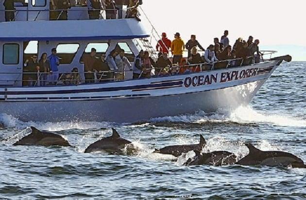 Davey's Locker para ver as baleias em Newport Beach