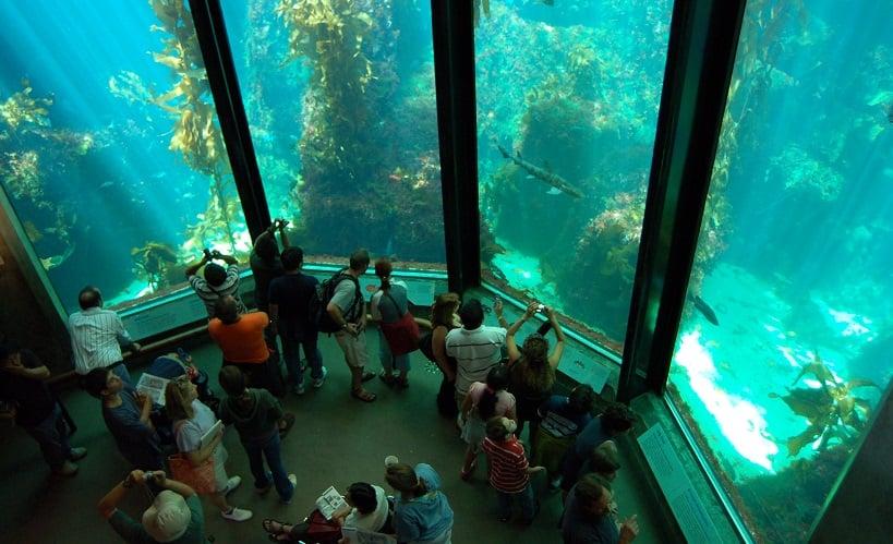 Monterey Bay Aquarium em Monterey