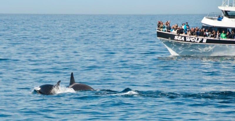 Ir com criança em um passeio de barco para observar as baleias em Monterey